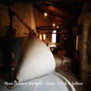 visita-almassera-dels-molto-02