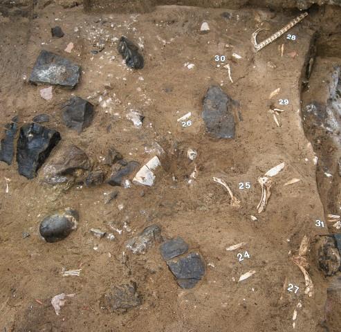 Restos de atunes romanos en proceso de excavacion