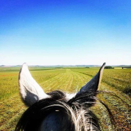 Cabeza de caballo y campo