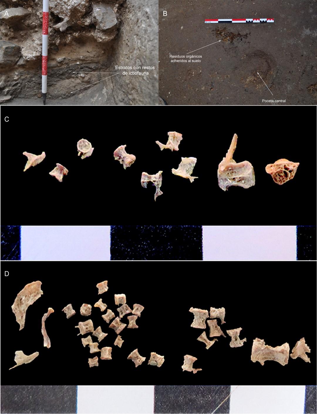 Restos de garum en piletas romanas – Darío Bernal