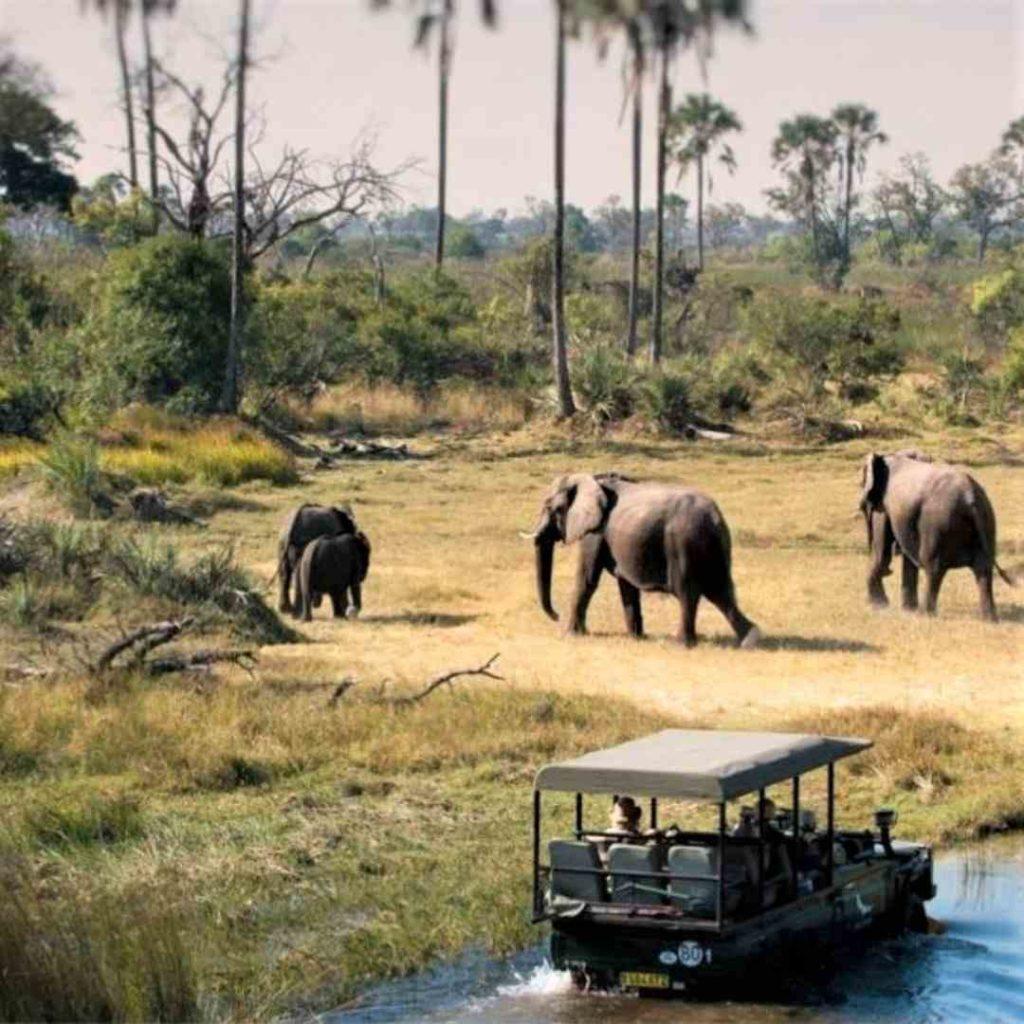 Elefantes cruzando un río en Tanzania