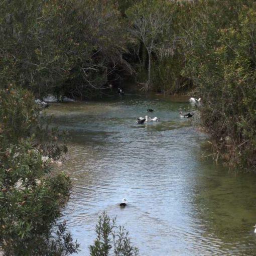 Rio de Bilbaite con patos y vegetación